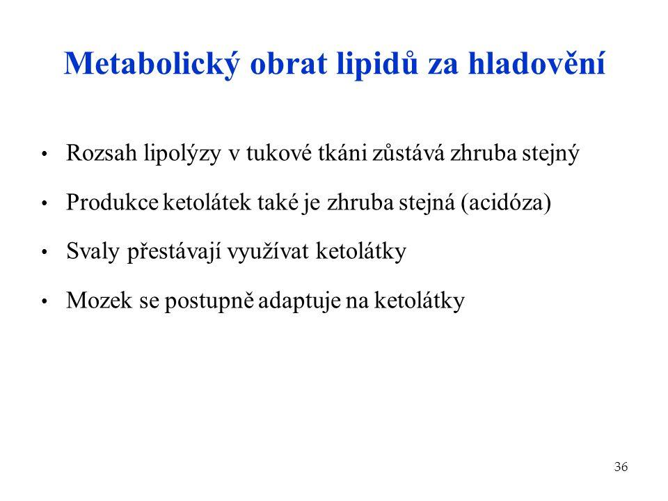 Metabolický obrat lipidů za hladovění