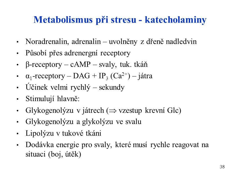 Metabolismus při stresu - katecholaminy