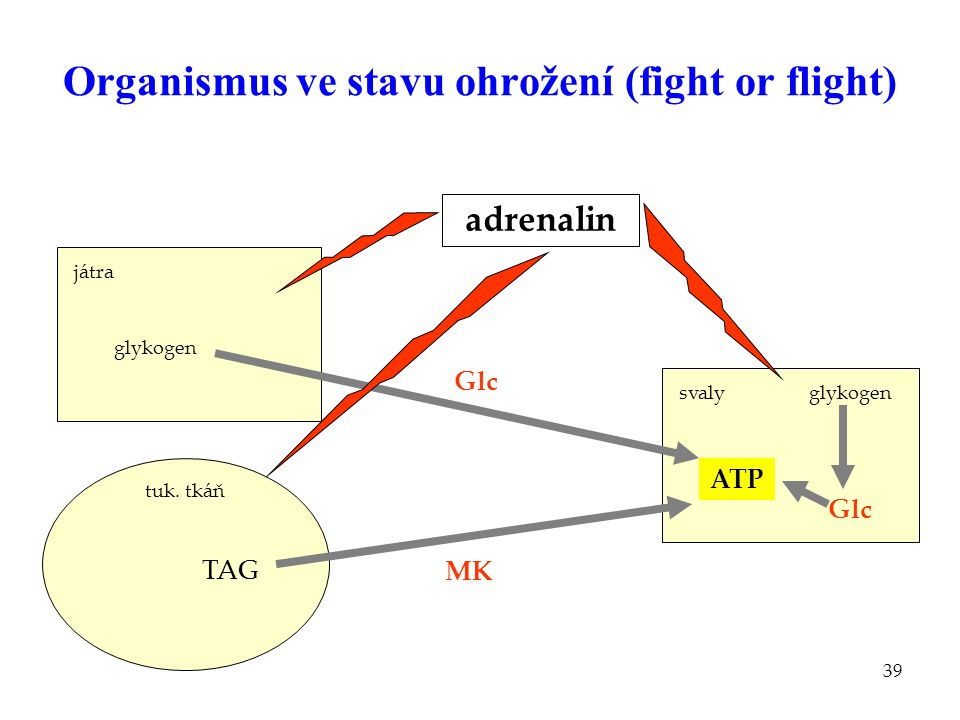Organismus ve stavu ohrožení (fight or flight)