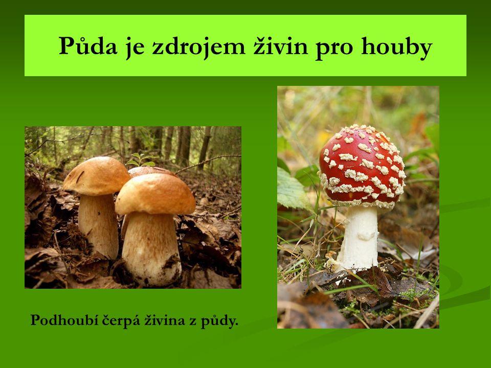 Půda je zdrojem živin pro houby