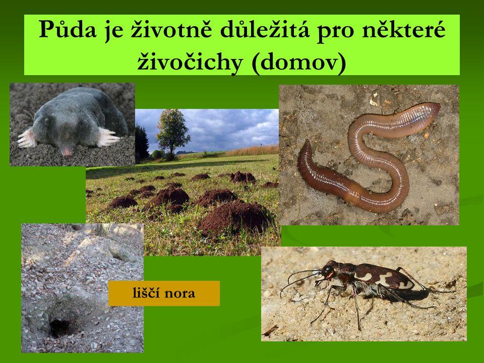 Půda je životně důležitá pro některé živočichy (domov)