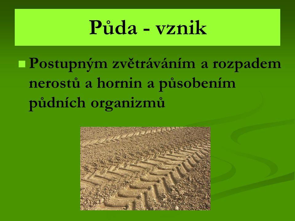 Půda - vznik Postupným zvětráváním a rozpadem nerostů a hornin a působením půdních organizmů