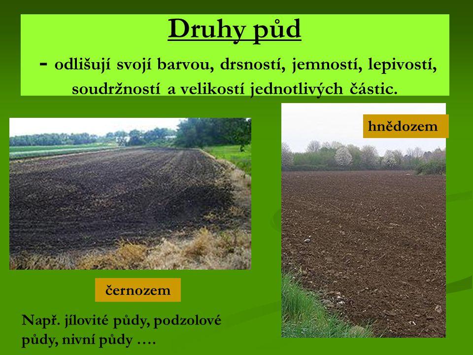 Druhy půd - odlišují svojí barvou, drsností, jemností, lepivostí, soudržností a velikostí jednotlivých částic.