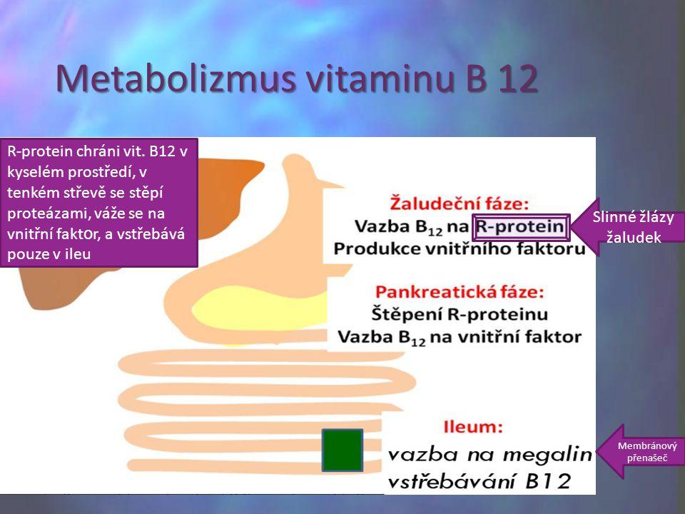 Metabolizmus vitaminu B 12