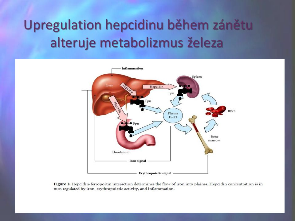 Upregulation hepcidinu během zánětu alteruje metabolizmus železa