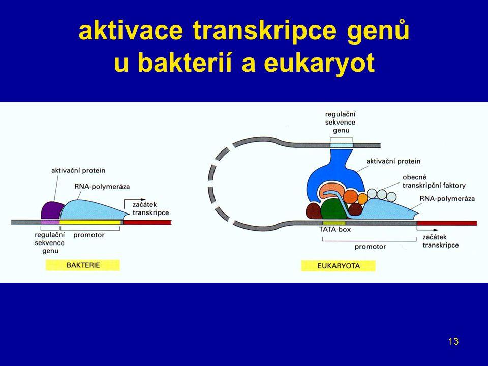 aktivace transkripce genů u bakterií a eukaryot