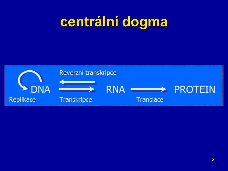 centrální dogma