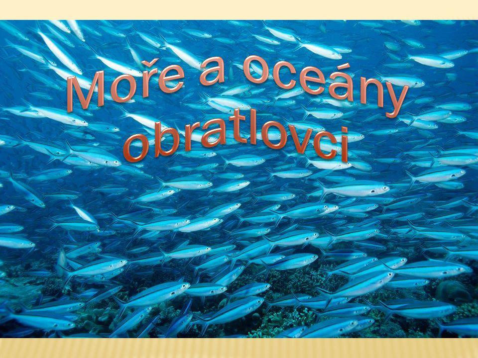 Moře a oceány obratlovci