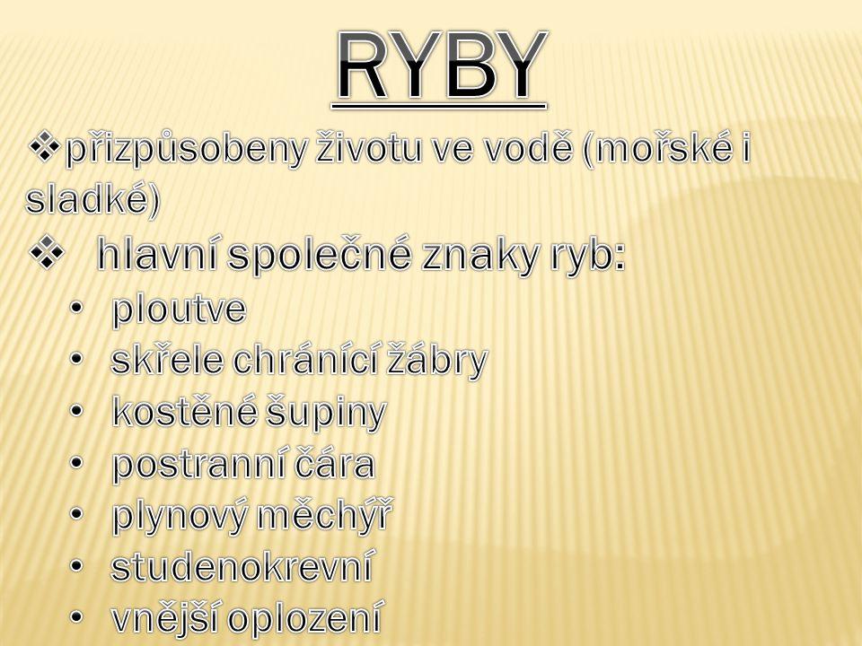 RYBY hlavní společné znaky ryb: