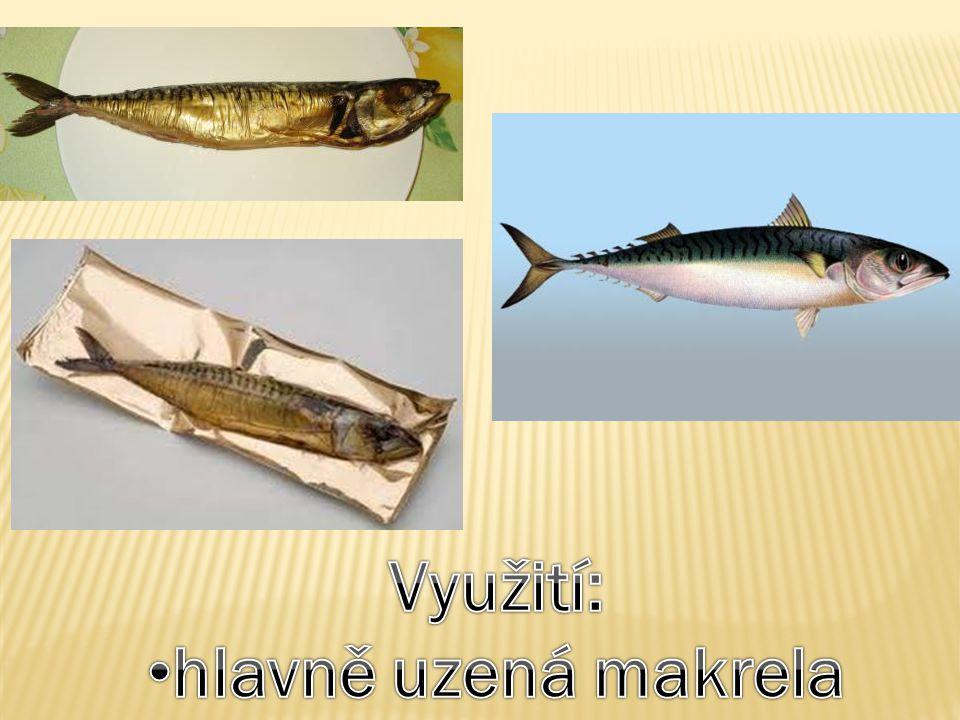 Využití: hlavně uzená makrela