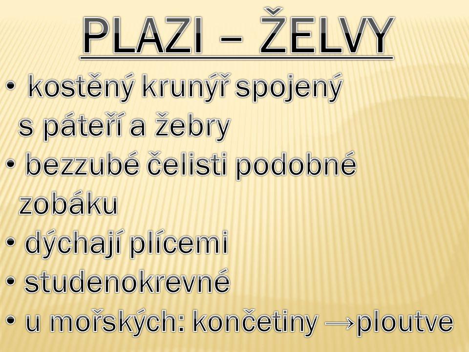 PLAZI – ŽELVY kostěný krunýř spojený s páteří a žebry
