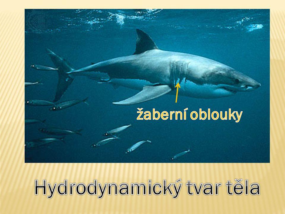 Hydrodynamický tvar těla
