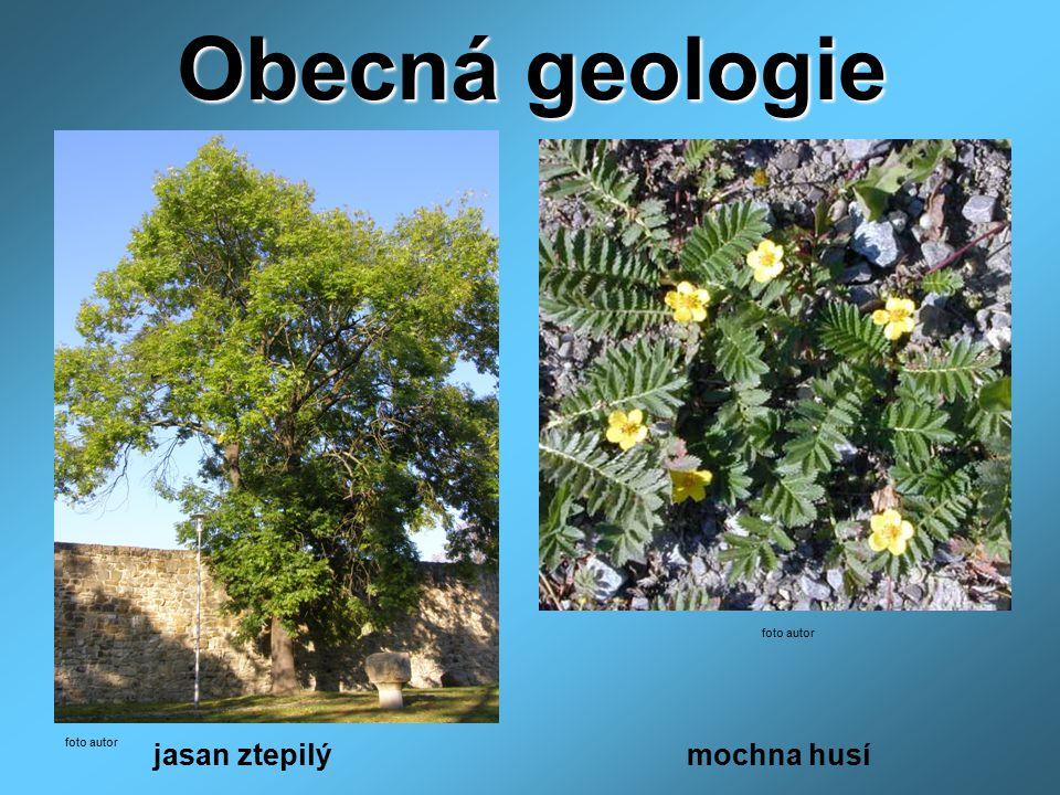 Obecná geologie foto autor foto autor jasan ztepilý mochna husí
