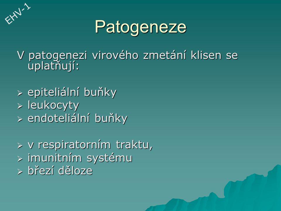 Patogeneze V patogenezi virového zmetání klisen se uplatňují:
