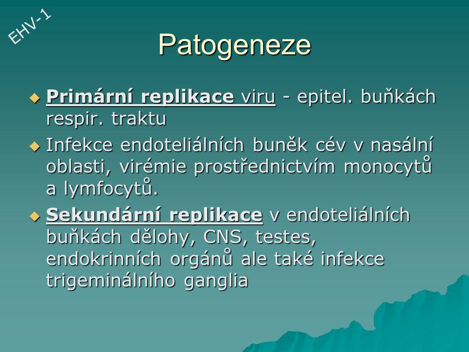 Patogeneze Primární replikace viru - epitel. buňkách respir. traktu
