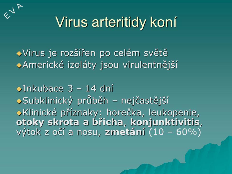 Virus arteritidy koní Virus je rozšířen po celém světě