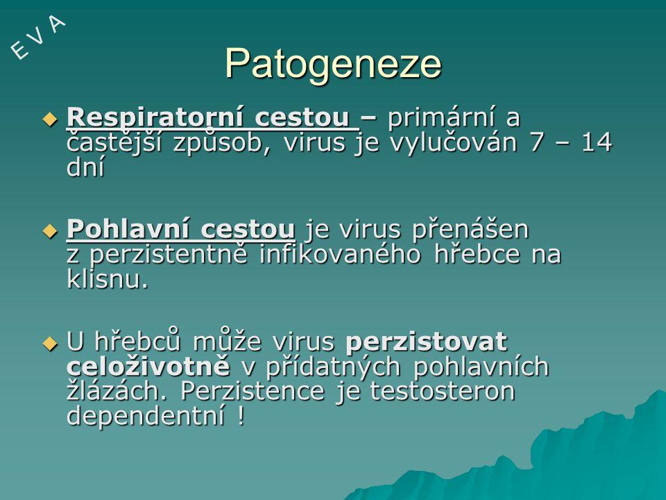 E V A Patogeneze. Respiratorní cestou – primární a častější způsob, virus je vylučován 7 – 14 dní.