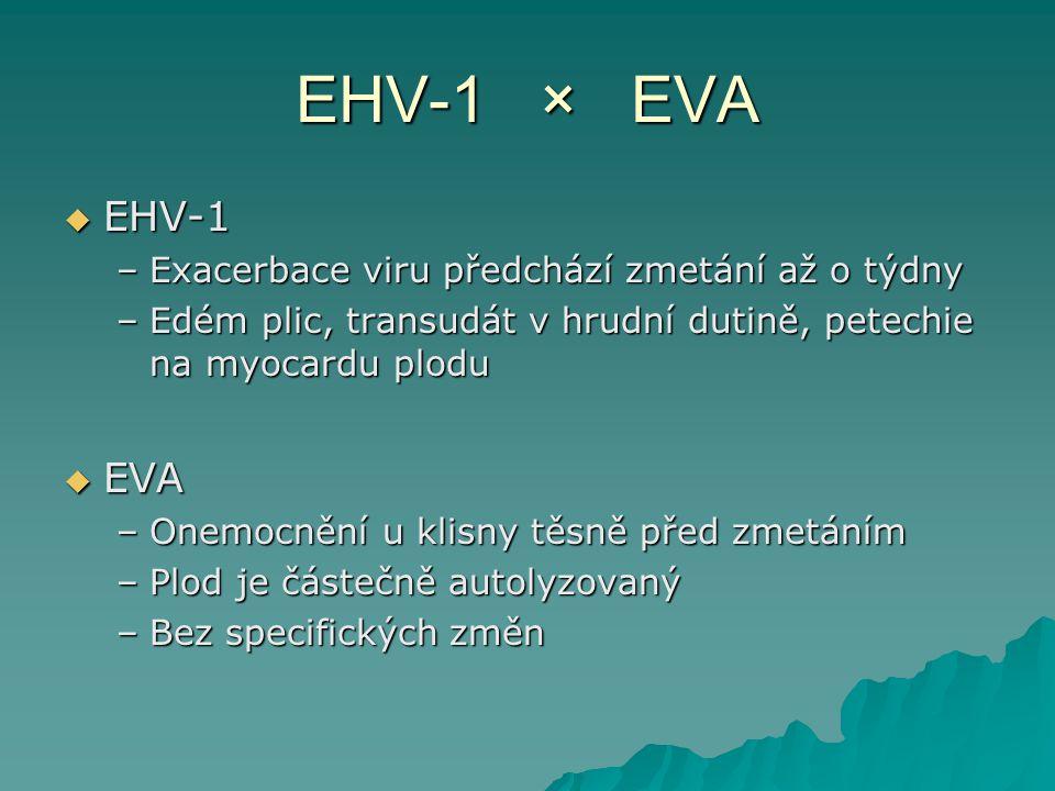 EHV-1 × EVA EHV-1 EVA Exacerbace viru předchází zmetání až o týdny