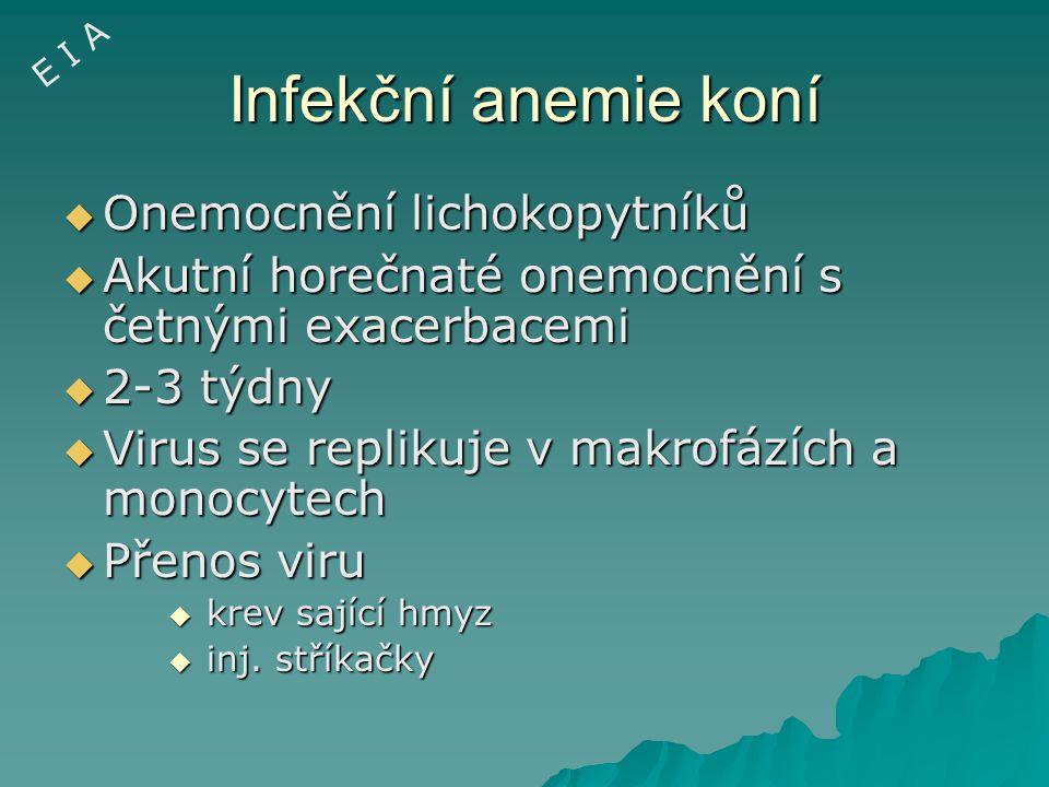 Infekční anemie koní Onemocnění lichokopytníků