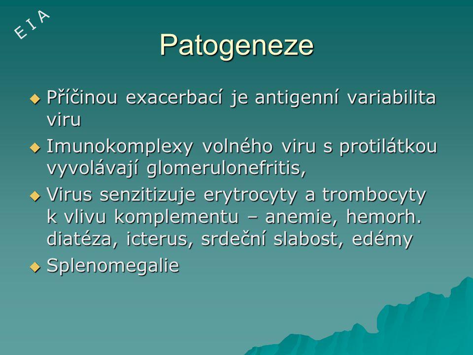 Patogeneze Příčinou exacerbací je antigenní variabilita viru
