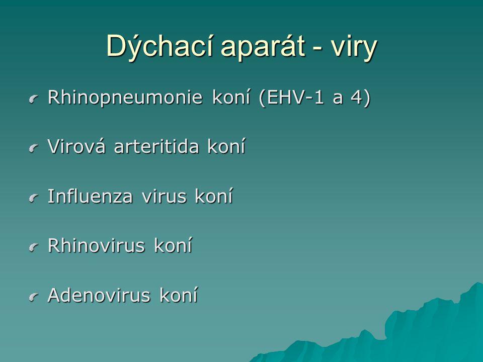 Dýchací aparát - viry Rhinopneumonie koní (EHV-1 a 4)