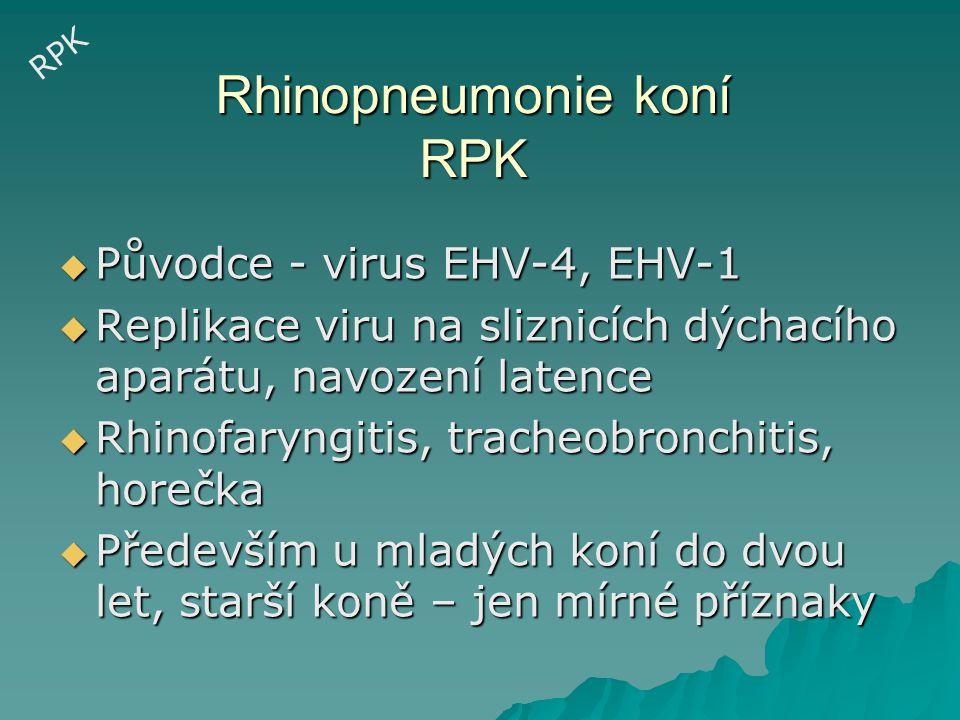 Rhinopneumonie koní RPK
