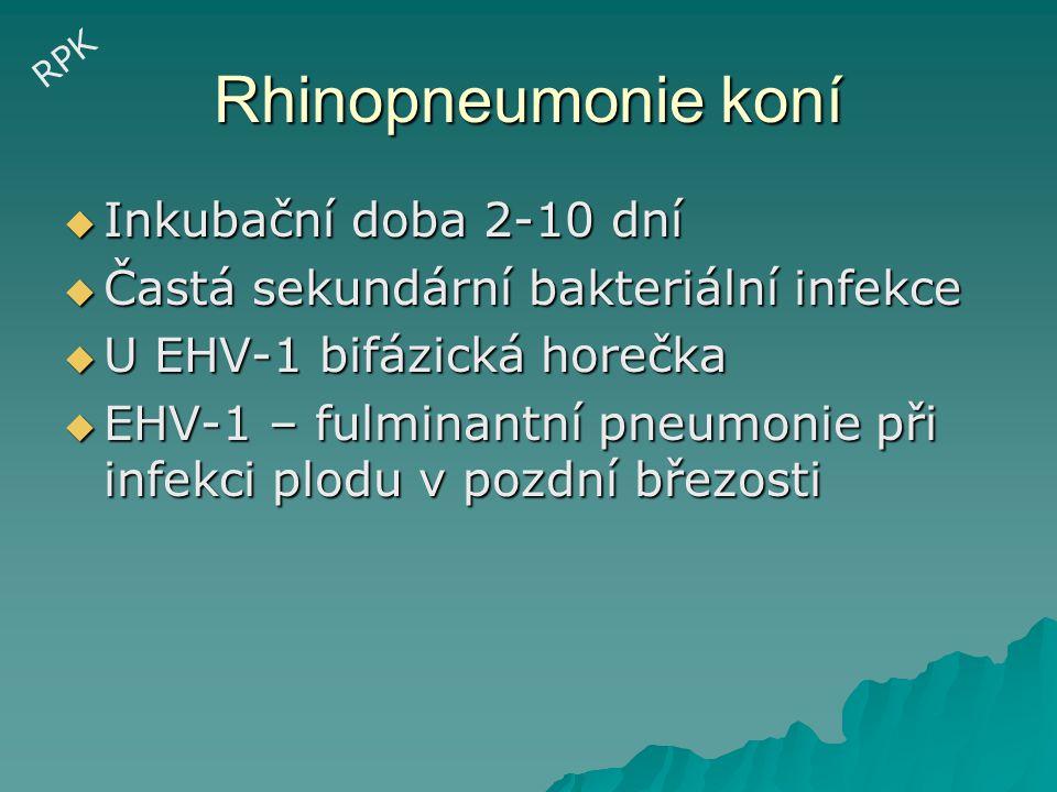 Rhinopneumonie koní Inkubační doba 2-10 dní