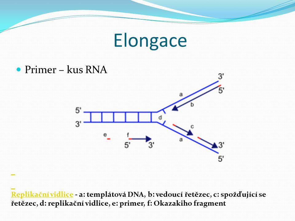 Elongace Primer – kus RNA