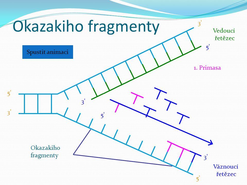 Okazakiho fragmenty 3 Vedoucí řetězec 5 Spustit animaci 1. Primasa