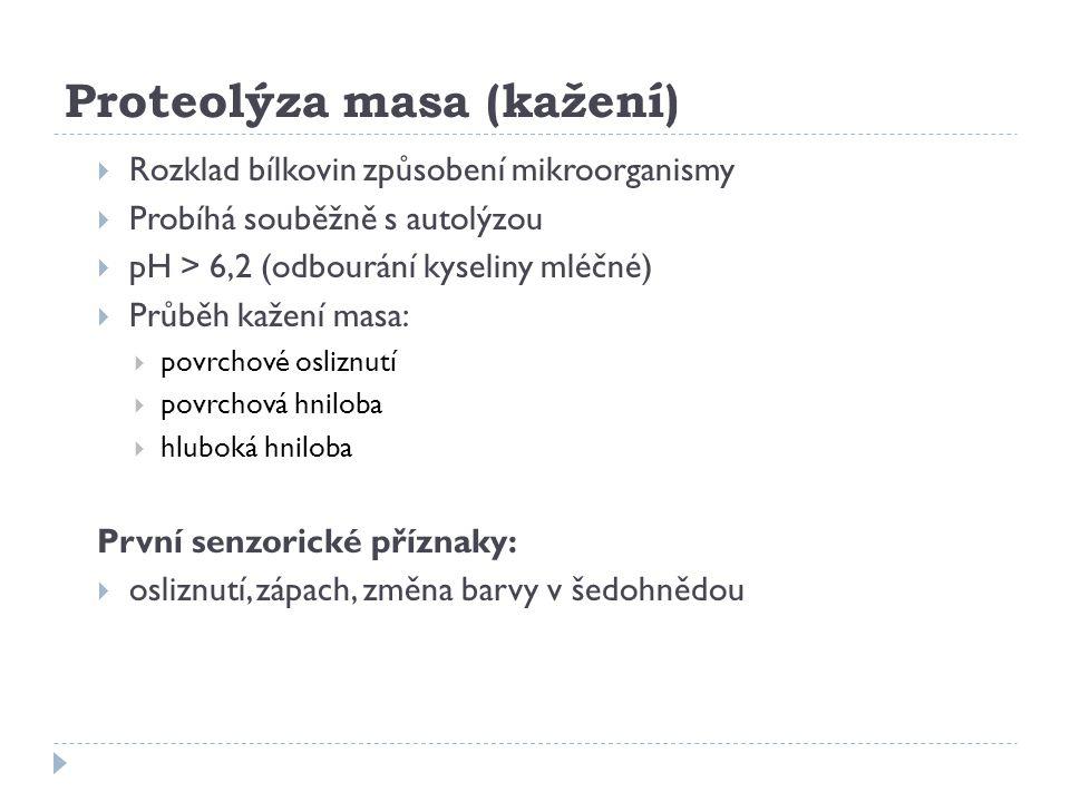 Proteolýza masa (kažení)