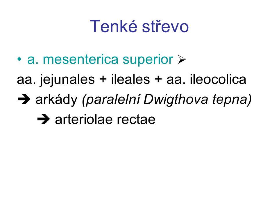 Tenké střevo a. mesenterica superior 