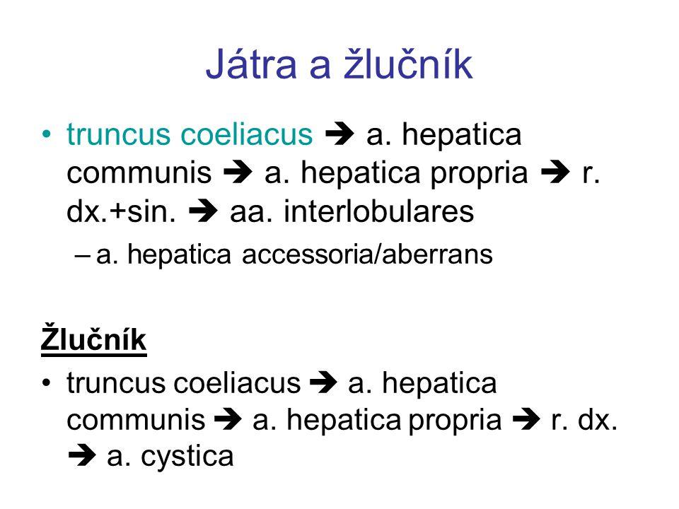 Játra a žlučník truncus coeliacus  a. hepatica communis  a. hepatica propria  r. dx.+sin.  aa. interlobulares.