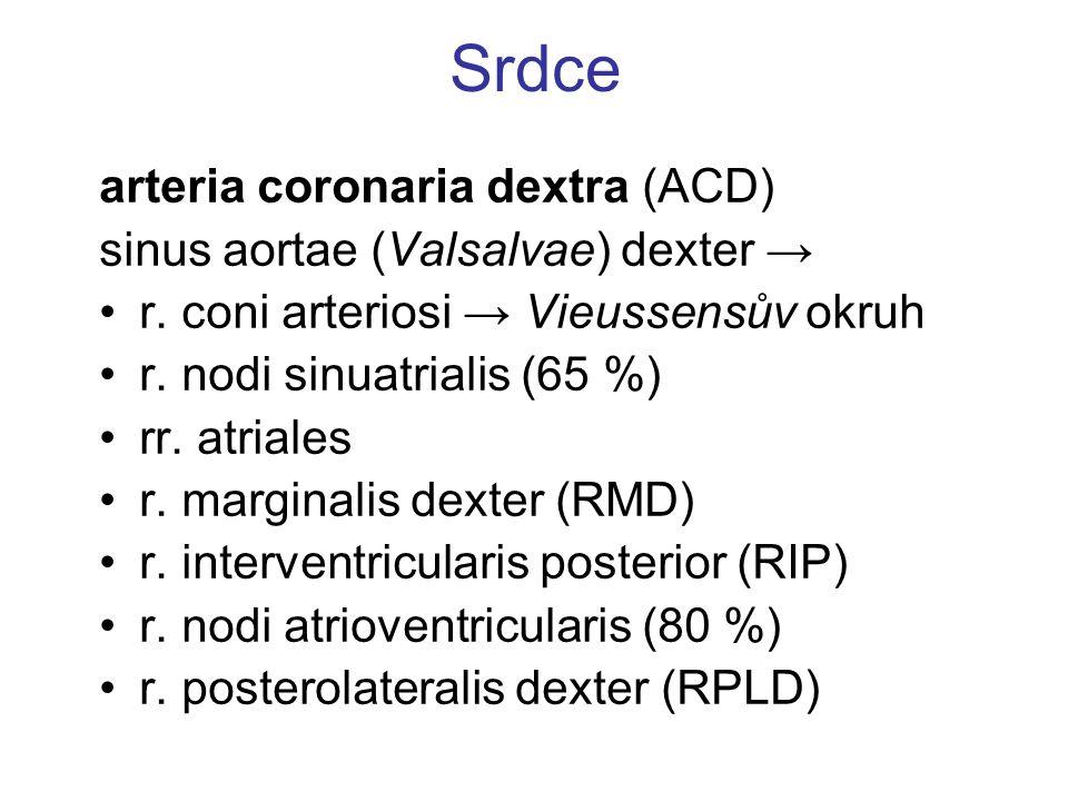 Srdce arteria coronaria dextra (ACD) sinus aortae (Valsalvae) dexter →