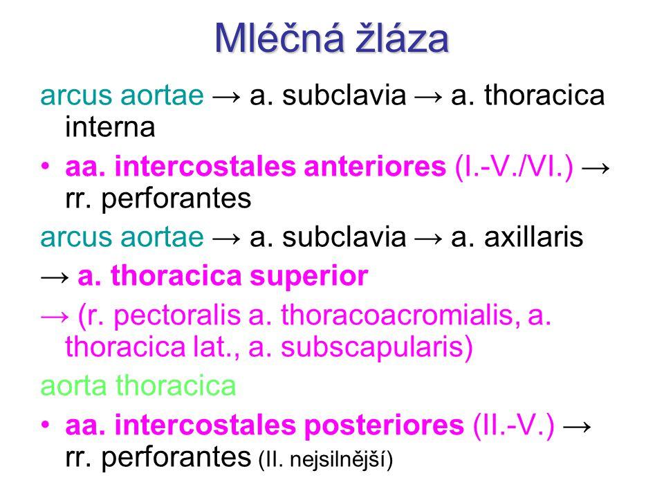 Mléčná žláza arcus aortae → a. subclavia → a. thoracica interna