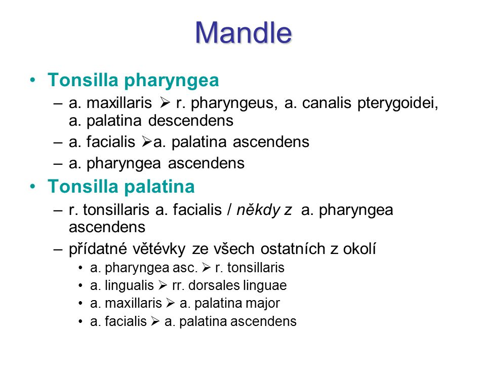Mandle Tonsilla pharyngea Tonsilla palatina