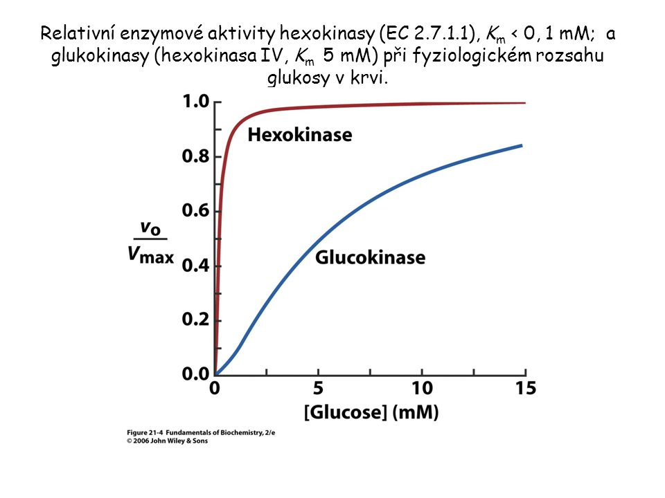 Relativní enzymové aktivity hexokinasy (EC 2. 7. 1