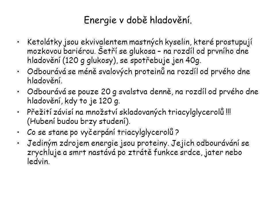 Energie v době hladovění.