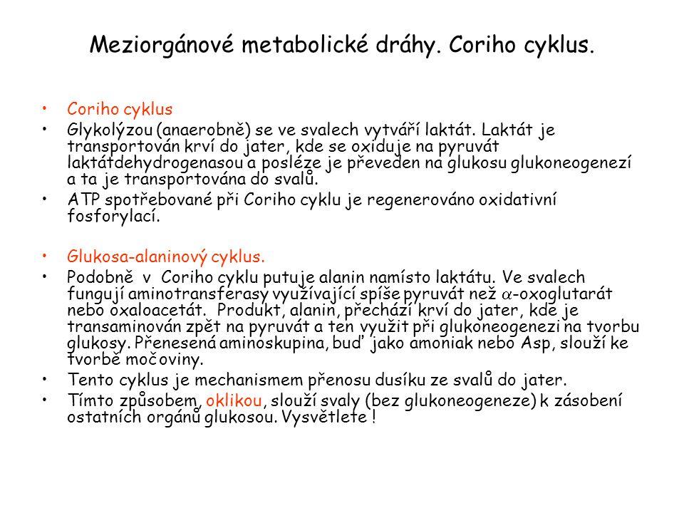 Meziorgánové metabolické dráhy. Coriho cyklus.