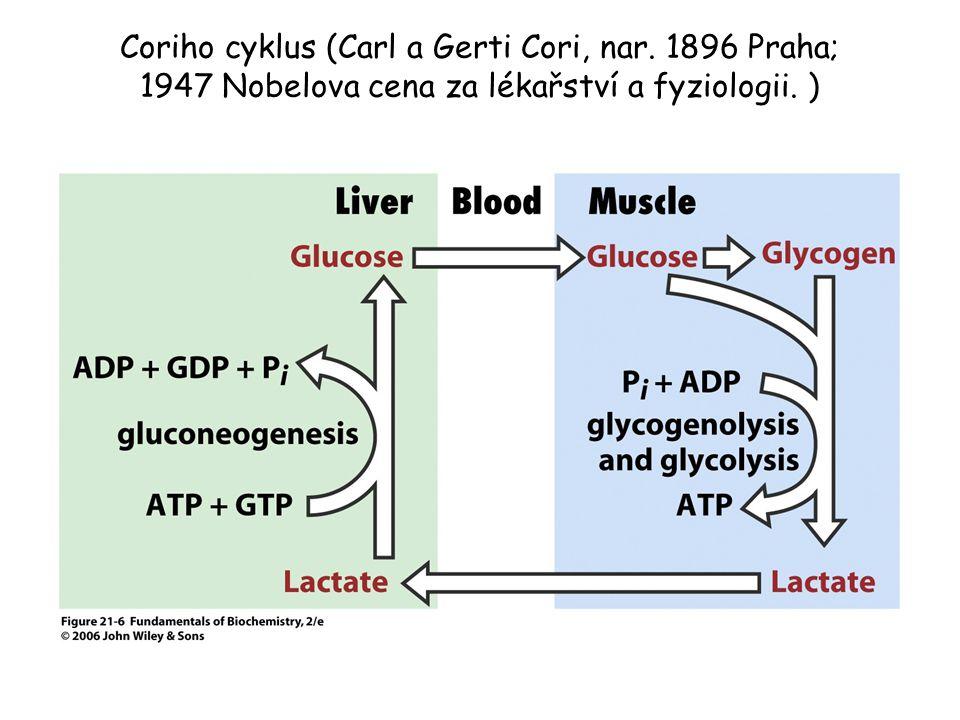 Coriho cyklus (Carl a Gerti Cori, nar