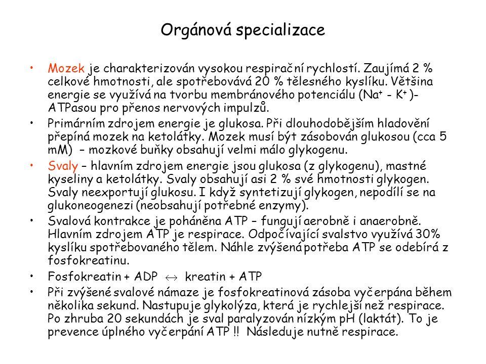 Orgánová specializace
