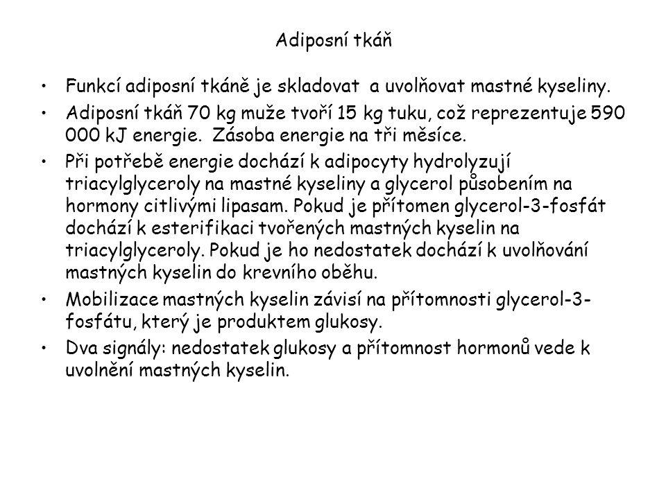 Adiposní tkáň Funkcí adiposní tkáně je skladovat a uvolňovat mastné kyseliny.