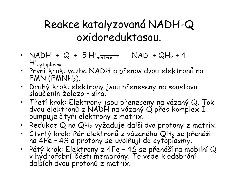 Reakce katalyzovaná NADH-Q oxidoreduktasou.