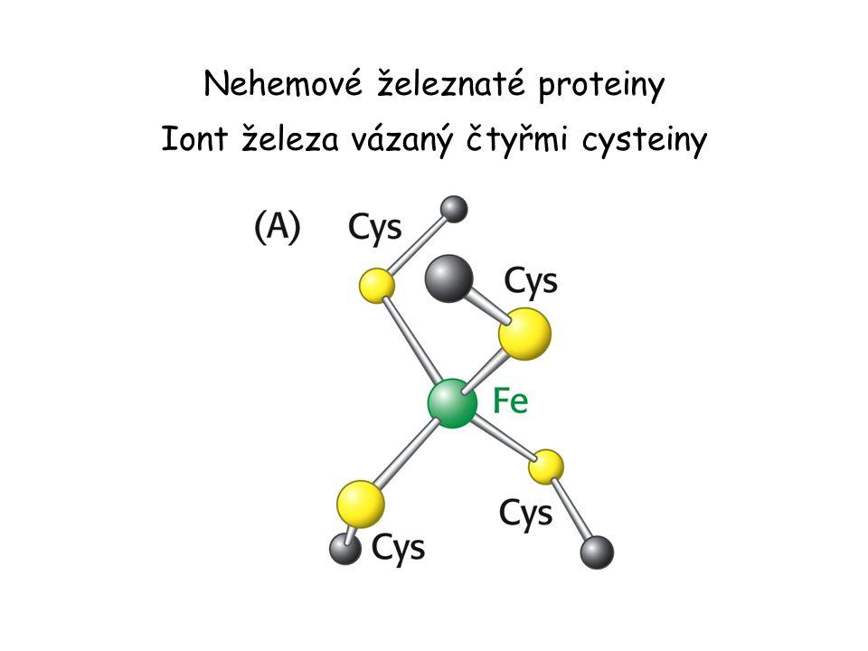 Nehemové železnaté proteiny Iont železa vázaný čtyřmi cysteiny