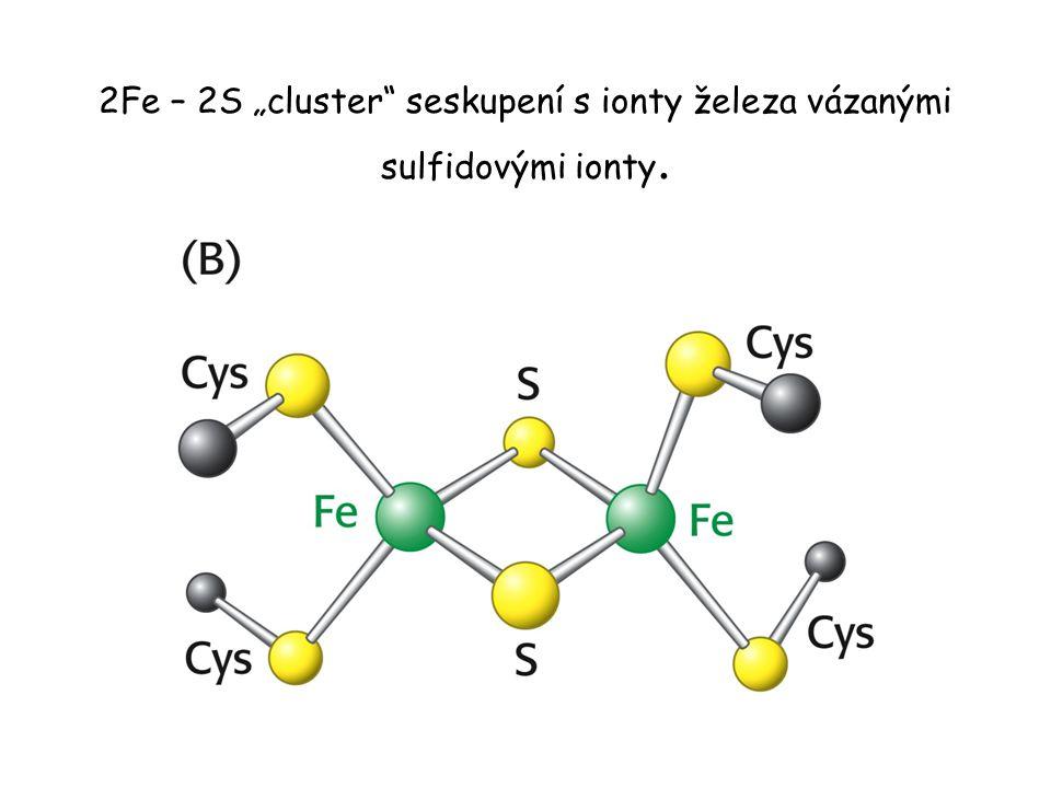"""2Fe – 2S """"cluster seskupení s ionty železa vázanými sulfidovými ionty."""