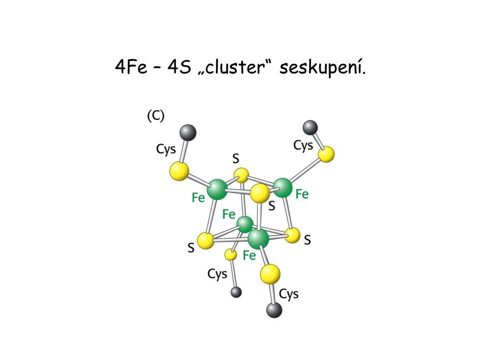 """4Fe – 4S """"cluster seskupení."""