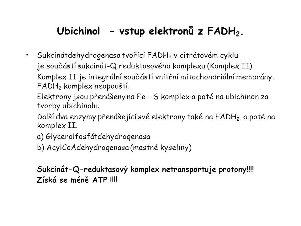 Ubichinol - vstup elektronů z FADH2.