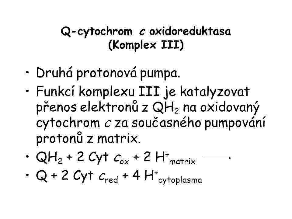 Q-cytochrom c oxidoreduktasa (Komplex III)