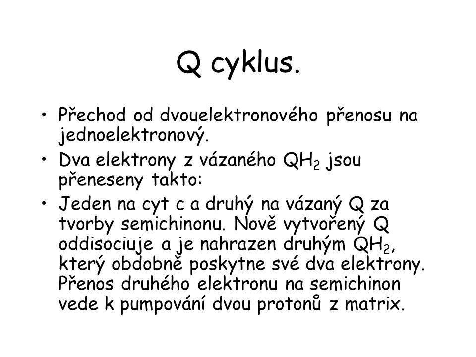 Q cyklus. Přechod od dvouelektronového přenosu na jednoelektronový.