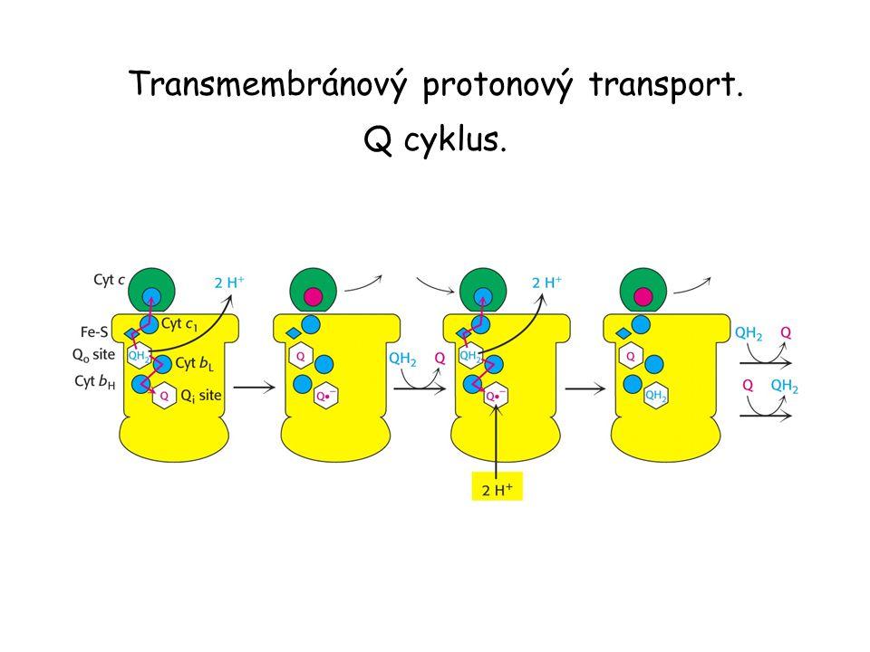 Transmembránový protonový transport. Q cyklus.