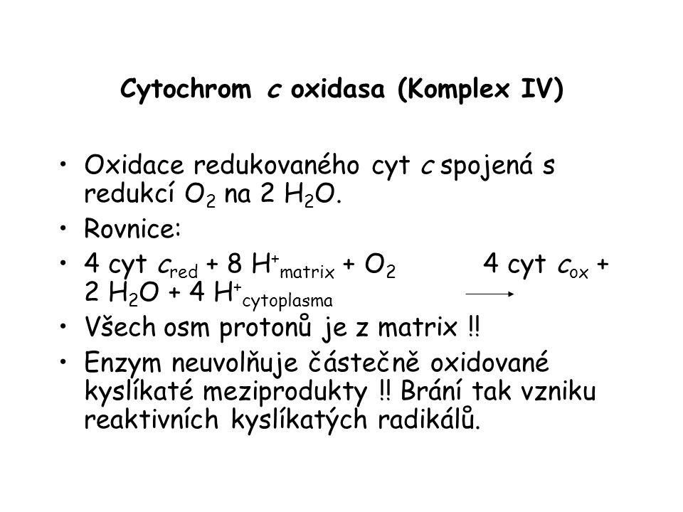 Cytochrom c oxidasa (Komplex IV)